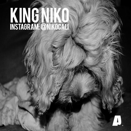 PHOTO: KING NIKO